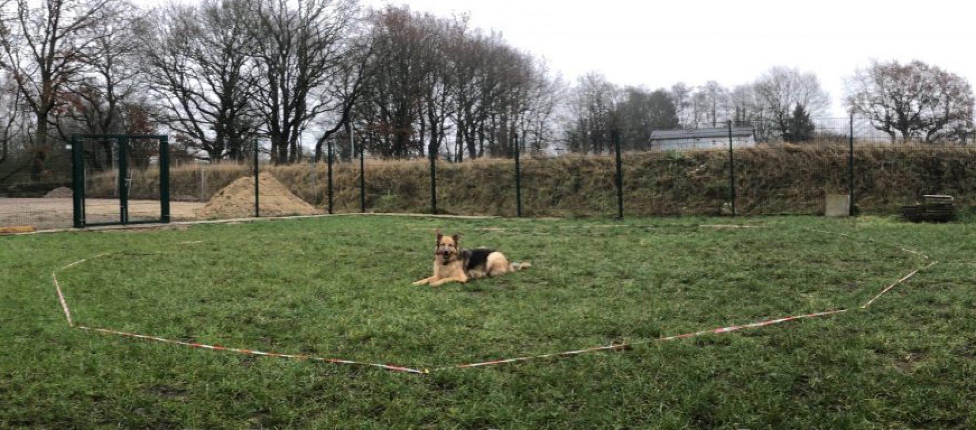 Hundeschule am Tierheim